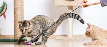 Ejercicios en los gatos